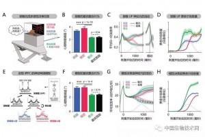 多模态感觉信息整合与决策的神经机制研究获进展
