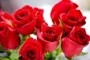 喜欢菊花不如养盆珍品玫瑰卡罗拉花样红艳似火惹人喜欢