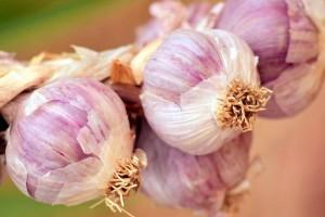 胃溃疡可以吃大蒜吗老年胃溃疡的发病特点