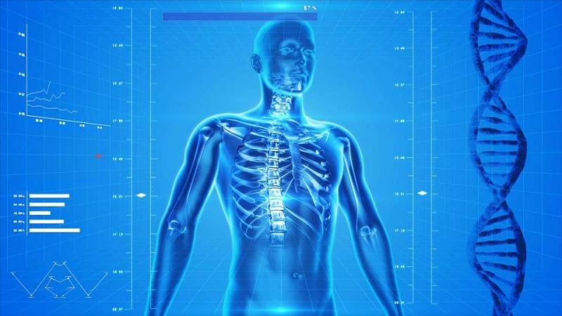人体骨骼内脏图分布图能够反映出什么问题